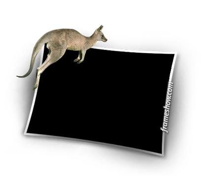 kangaroo picture frame