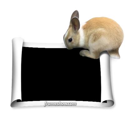 rabbit image frame